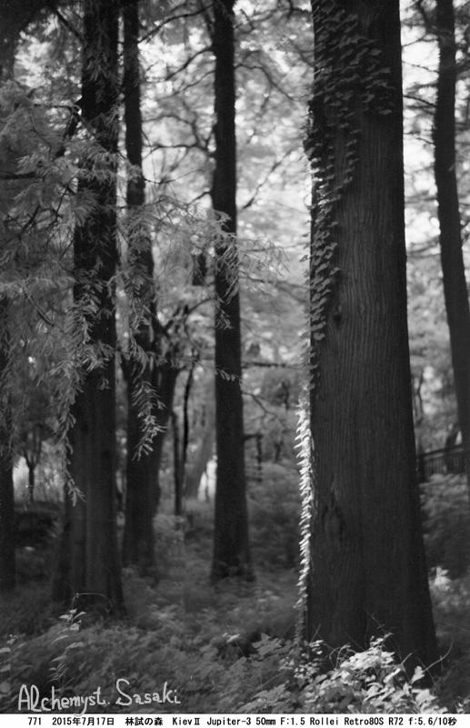 林試の森771-20