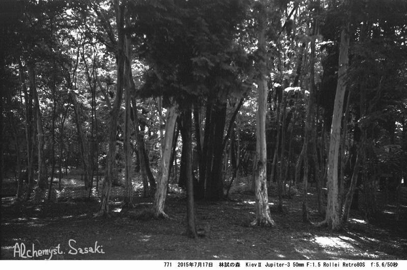 林試の森771-23