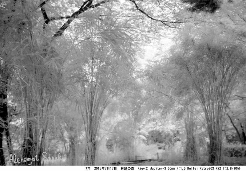 林試の森771-21