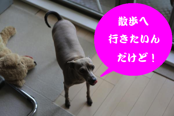 IMG_0271_convert_20150804205242.jpg