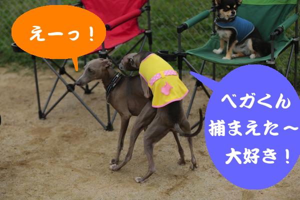 IMG_4700_convert_20150703200533.jpg