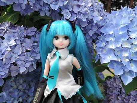 DSCN3320_2015061110430749d.jpg