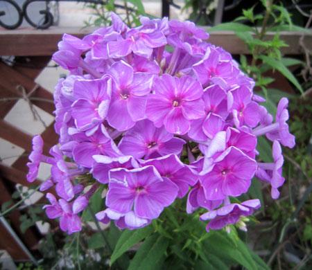 自然交配されて生まれたお花