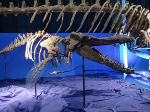 シガ マッコウ クジラ