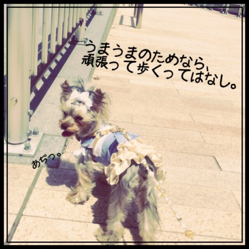 IMG_6162.jpg