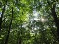 林内は涼しいけれど、日射しは!
