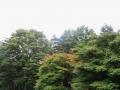 紅葉しかけた木も