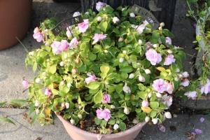 夏の小花1