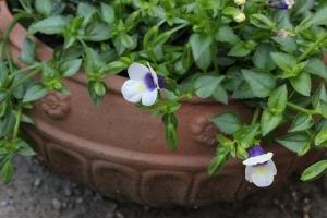 夏の小花2