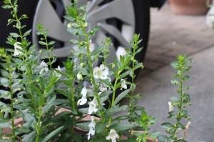 夏の小花3