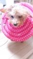 ガルーダ 円盤ピンク