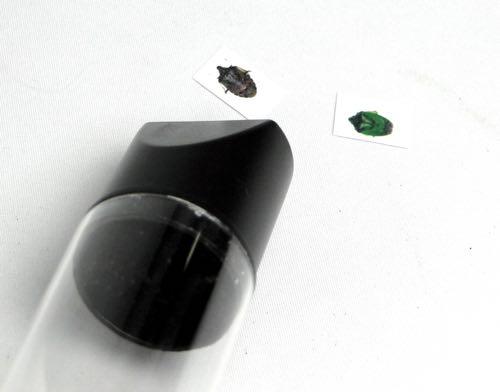 BugCatcher_09.jpg