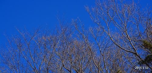 s-冬晴れ20150112