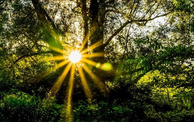 forest-396025_640.jpg