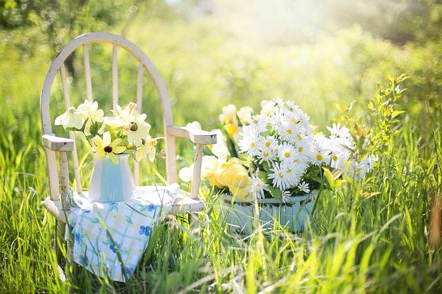 summer-still-life-779386_640.jpg
