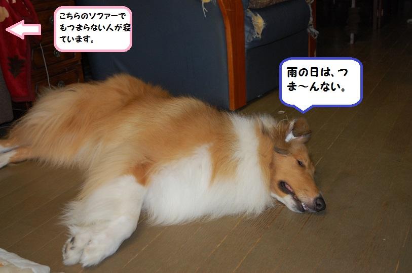 amenohi04.jpg