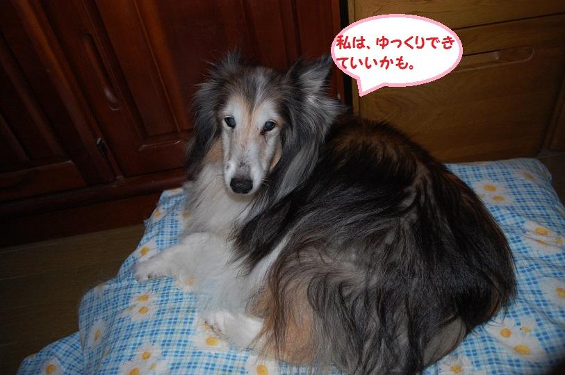 amenohi05.jpg