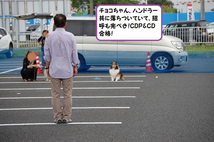 cd209.jpg