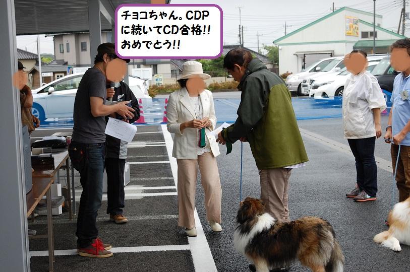 cd210.jpg