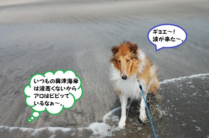 sirako02.jpg