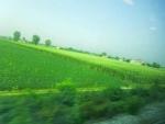 車窓から麦畑