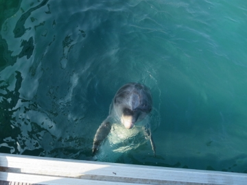 背びれにつかまって泳いで貰ったりもしました