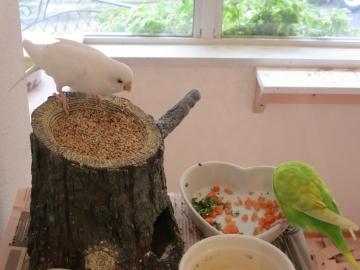 清潔にされた空間で、餌を食べ寛ぐ