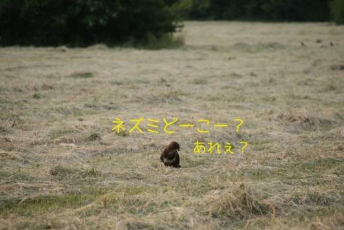 ネズミどーこーby鳥