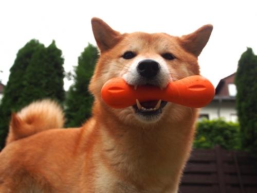 アスカがオレンジのくわえてる