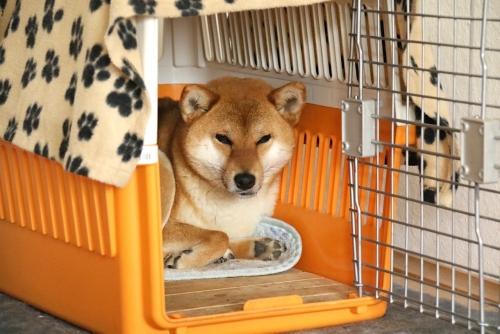 セナの犬小屋