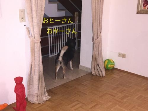 玄関を見つめるロザくん