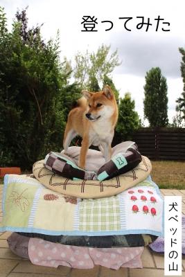 犬ベッドの山1