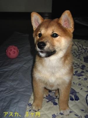 アスカ、3ヶ月