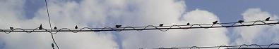 P1011633燕雛巣立ち3