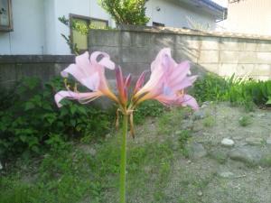 DSC_0078_convert_20150808080914.jpg
