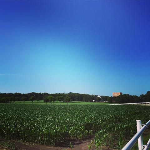 20150717野幌青空