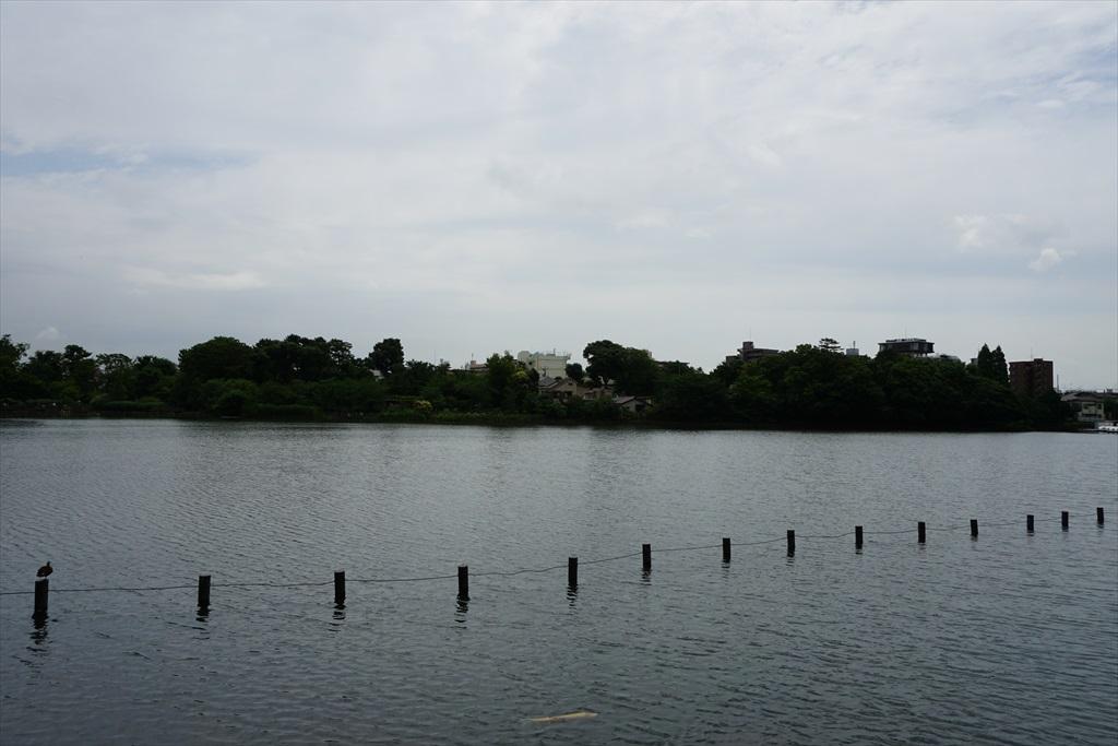 池月橋付近からの眺め_12