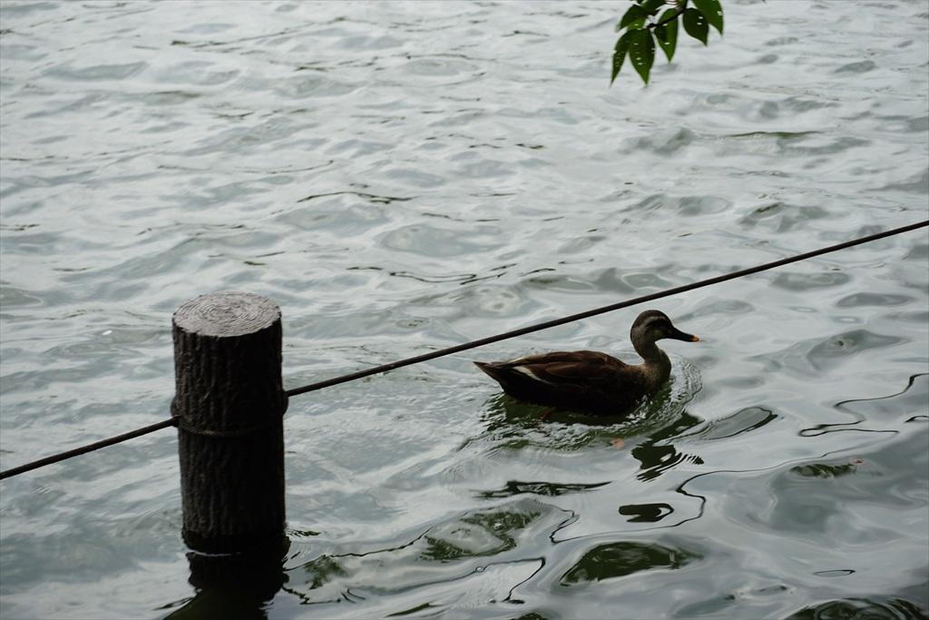 水際まで下りてみる_3