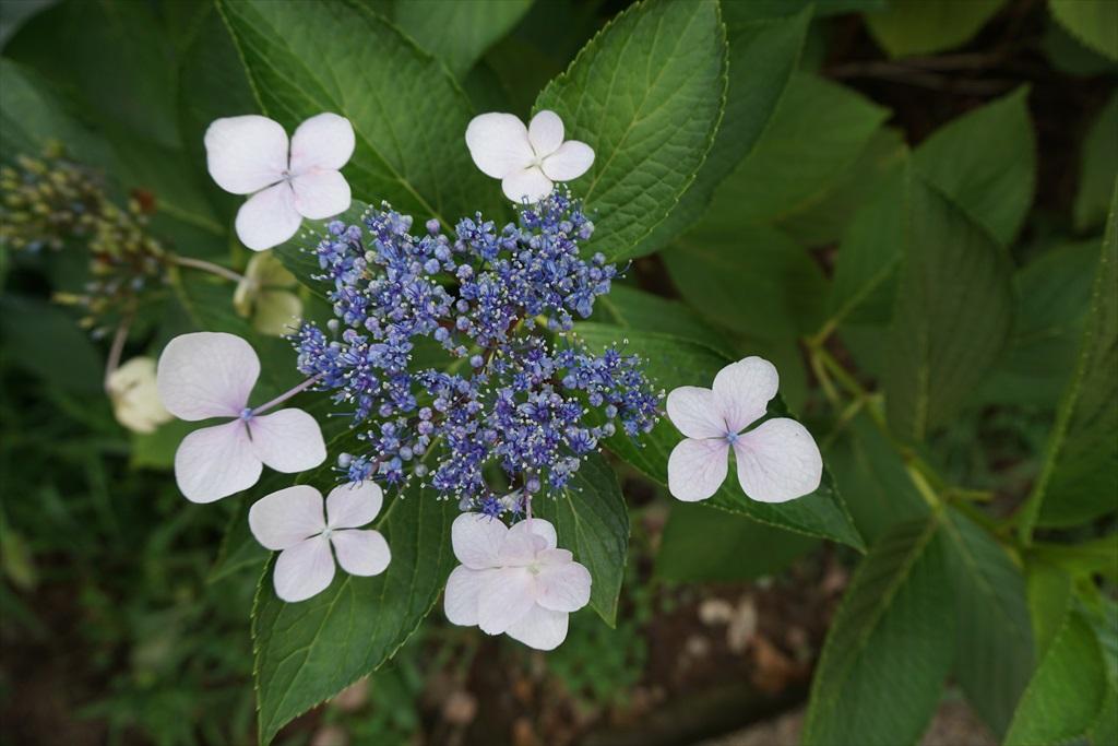 近くに咲いていた花_4