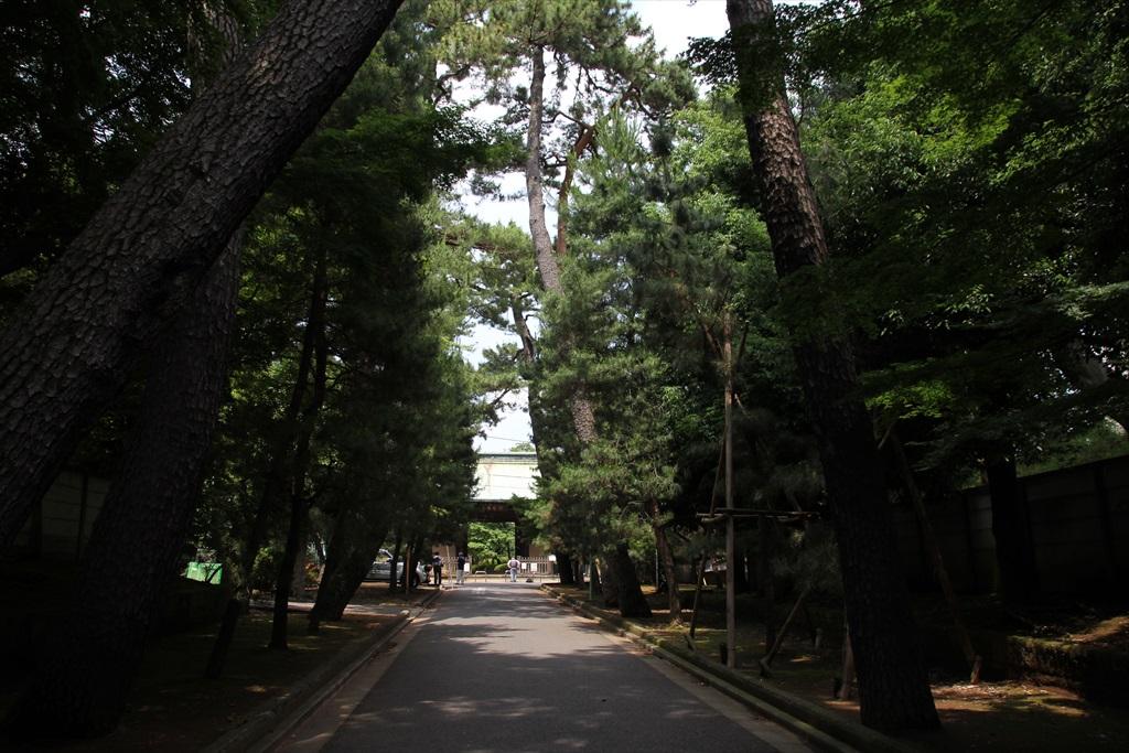山門前の参道松並木_1