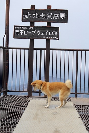 s-ryuouIMG_7806.jpg