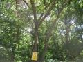 今日のクヌギ林