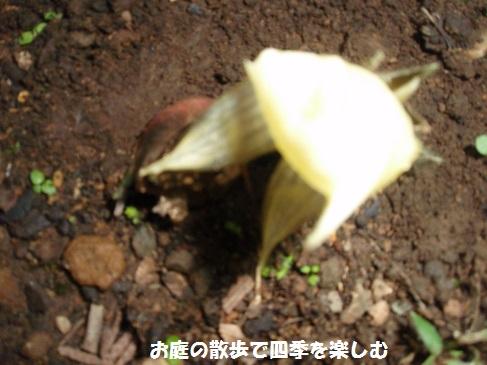 myouga3_20150722214807e23.jpg