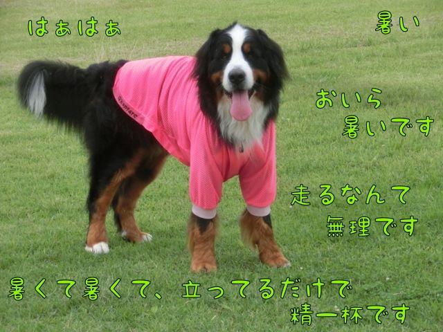 CIMG4021.jpg