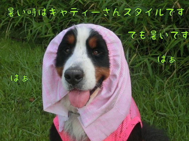 CIMG4054_20150712115828e0c.jpg