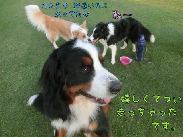 CIMG4058_201507131051445c6.jpg