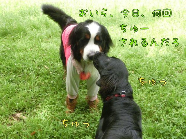 CIMG4231_20150720084717c86.jpg