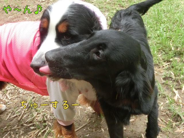 CIMG4257_20150720132434fff.jpg