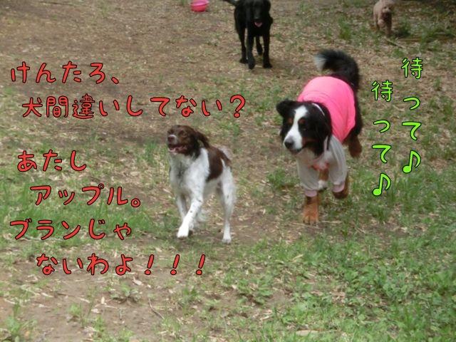 CIMG4270.jpg