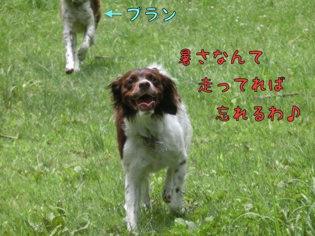 CIMG4272_20150720134301e97.jpg